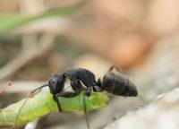 インフルエンザは蟻